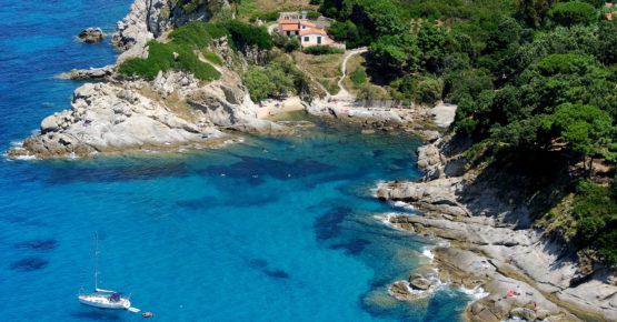 Cotoncello Isola d'Elba